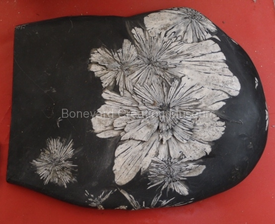 Chrysanthemum rock