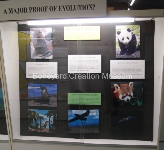 Proof of Evolution Display